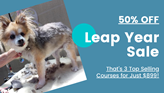 Picture of Dog Grooming Diploma Course Bundle