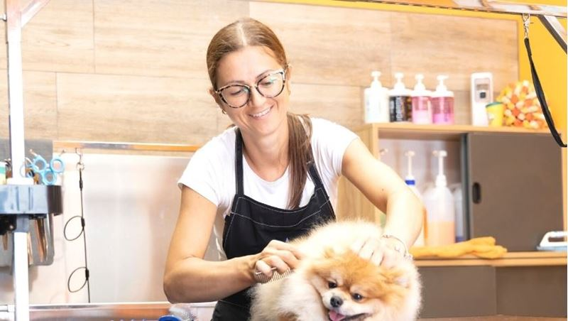 Picture of Certificate in Dog Grooming